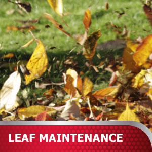 Leaf Maintenance Products